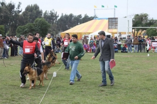 Judging in 2011 in La Serena-Chile Munir Ghatttas